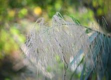 Высокорослый тростник стоковая фотография