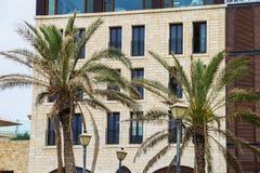 2 высокорослых ладони на предпосылке красивого фасада здания Стоковые Изображения RF