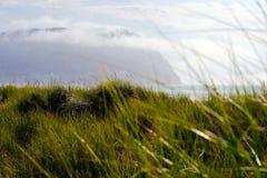 Высокорослая зеленая трава на океане песчанных дюн прибрежном Стоковое фото RF