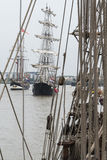 Высокорослая регата Лондон 2014 кораблей Стоковое фото RF