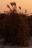 Высокорослая трава в ветерке стоковое изображение