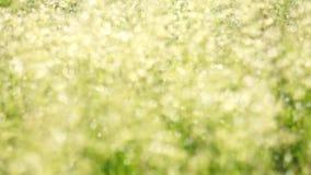 Высокорослая трава в ветре, солнечный свет сток-видео