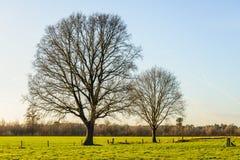 2 высокорослое и безлистные деревья в плоском сельском ландшафте Стоковая Фотография