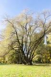 Высокорослое и наполовину чуть-чуть дерево в осени стоковая фотография
