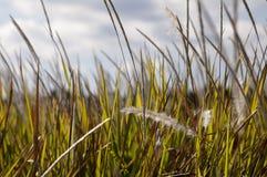 Высокорослое поле Стоковая Фотография