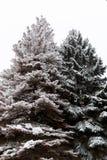 2 высокорослое рождественских елок Стоковое фото RF