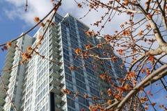 Высокорослое современное корпоративное здание Стоковые Фото