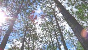 высокорослые валы Стоковые Фотографии RF