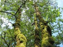 Мшистые деревья стоковое фото rf