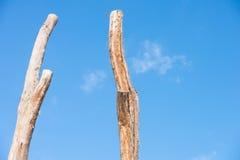 2 высокорослых мертвых стержня дерева изолировали голубое небо Стоковое фото RF