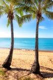 2 высокорослых пальмы на тропическом пляже в Австралии Стоковая Фотография
