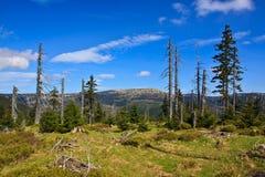 Высоко равнина - чехия Krkonose Стоковая Фотография