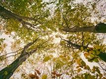 Высоты леса в сезоне осени Стоковые Изображения