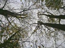 Высоты леса в сезоне осени стоковое изображение