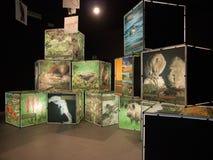 Выставка водоплавающей птицы с светлыми кубами в Urdaibai 2 Стоковая Фотография RF