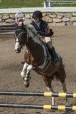 выставка всадника лошади скача Стоковое фото RF