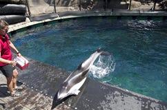 Выставка дельфина аквариума Ванкувера Стоковые Изображения