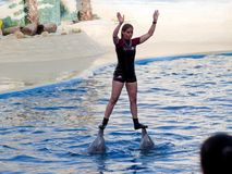 Выставка дельфина в аквариуме Мадриде зоопарка Стоковое фото RF