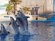 Выставка дельфина в аквариуме Мадриде Испании зоопарка Стоковая Фотография RF
