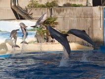 Выставка дельфина в аквариуме Мадриде Испании зоопарка Стоковые Изображения RF