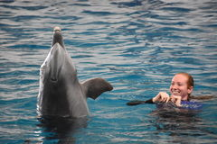 Выставка дельфина в Балтиморе, Мэриленде Стоковое фото RF