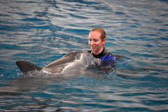 Выставка дельфина в Балтиморе, Мэриленде Стоковые Фотографии RF