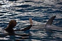 Выставка дельфина в Балтиморе, Мэриленде Стоковые Изображения RF