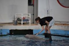 Выставка дельфина в Балтиморе, Мэриленде Стоковая Фотография