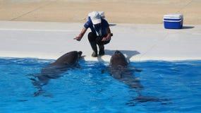 Выставка дельфина в Мальте Стоковые Фотографии RF