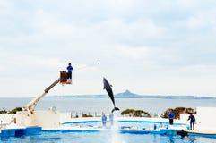 Выставка дельфина на аквариуме Окинавы Churaumi Стоковая Фотография RF