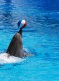 выставка дельфина Стоковое Изображение RF