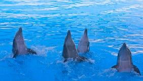 Выставка дельфина Стоковое Изображение