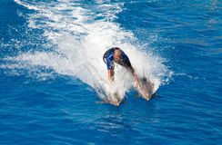 Выставка дельфина в Барселоне Стоковая Фотография RF