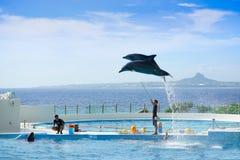 Выставка дельфина на парке экспо океана Окинавы Стоковая Фотография RF