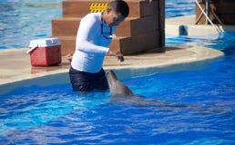 Выставка дельфина на Dolphinaris Стоковое Фото