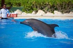 Выставка дельфина на Dolphinaris Стоковое Изображение RF