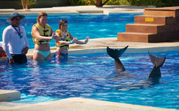 Выставка дельфина на Dolphinaris Стоковые Фотографии RF