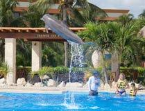 Выставка дельфина на Dolphinaris Стоковое Изображение