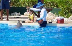 Выставка дельфина на Dolphinaris стоковые фото