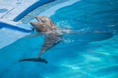 Выставка дельфина, плавая вокруг Стоковое Фото