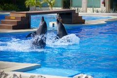 Выставка дельфина Стоковые Изображения RF