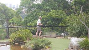 Выставка жизни птицы на зоопарке парка Toronga, Mosman, NSW, Австралии стоковые фотографии rf