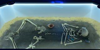 Выставка захоронения доисторического человека в контейнере музея Стоковые Изображения RF