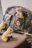 Выставка игрушек Вена, Австрия 02 03 2019 Игрушки плюша в форме нескольких мышей на кожаной черной сумке стоковые изображения