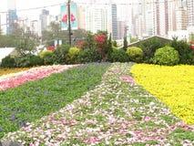 Выставка дизайна цветков Стоковое фото RF