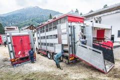 Выставка и состязание скотин на долине Brembana, Serina, Бергаме, Lombardia Италии Тележки для того чтобы транспортировать скотин Стоковое Изображение