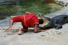 Выставка крокодила Стоковые Изображения RF