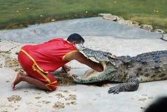 Выставка крокодила Стоковое Изображение