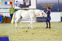 Выставка Москвы освобождая Hall международная конноспортивная во время выставки Жокей женщины в синем платье и белой лошади Стоковое фото RF