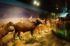 Выставка образцов дикого животного Стоковые Изображения